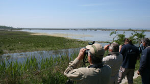 Bird Watching Lake Neusiedl